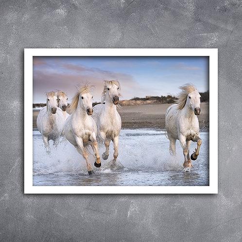 Quadro Cavalos Raça Camargue