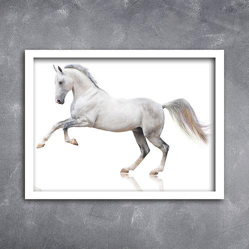 Quadro Cavalo Branco em Estúdio