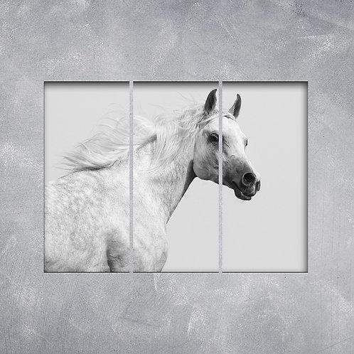 Quadro Cavalo Branco