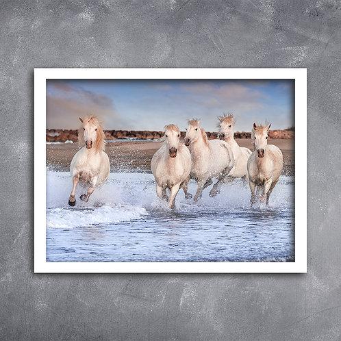 Quadro Cavalos Camargue da França