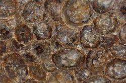 Brown Petrified Wood.png