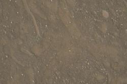 kaesar-brown.jpg