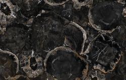 Grey Petrified Wood.png