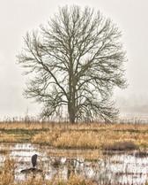 Ridgefield National Wildlife Refuge Washington_01