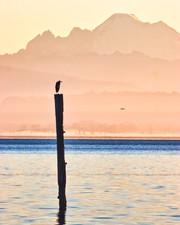 Camano Island Washington_005