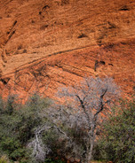 Zion National Park Utah_001