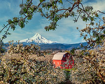 Store-Barn and Mt Hood - Hood River OR_0
