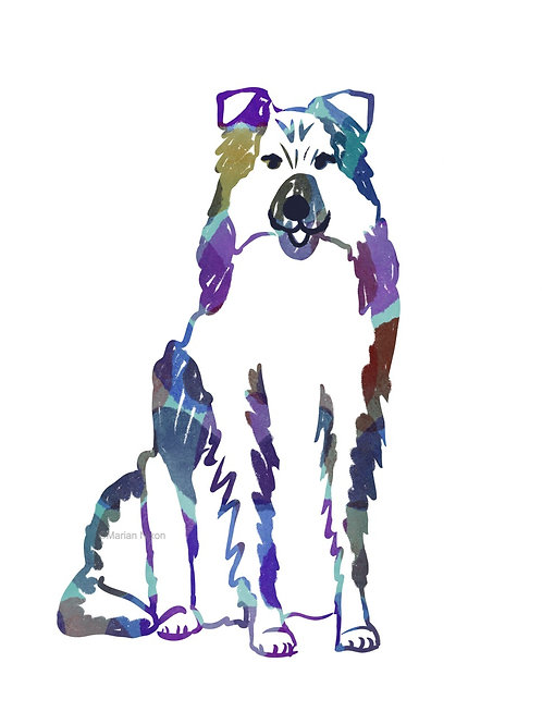 Collie or Australian Shepherd Dog Art Print, Personalized with Your Dog's Name