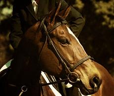 horse sitting pros