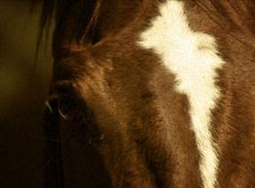 Happ horse