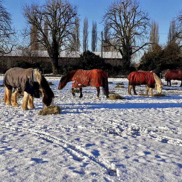 ponies in the snow.jpg