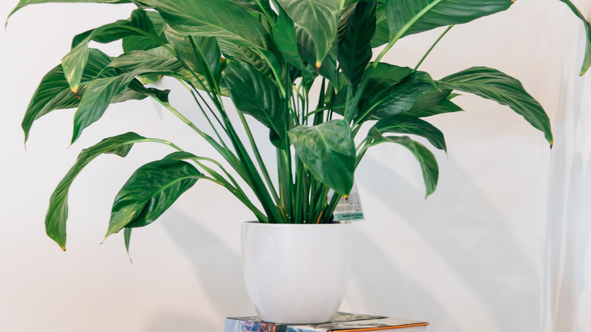 Sovereign Palms details