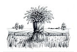 Cornfield Pen & Ink