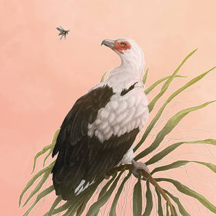 Ode to the palm-nut vulture