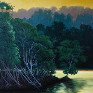 Morning mangroves
