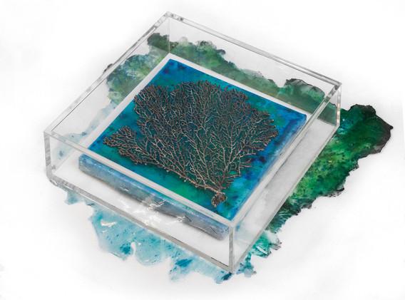 Isola dei coralli