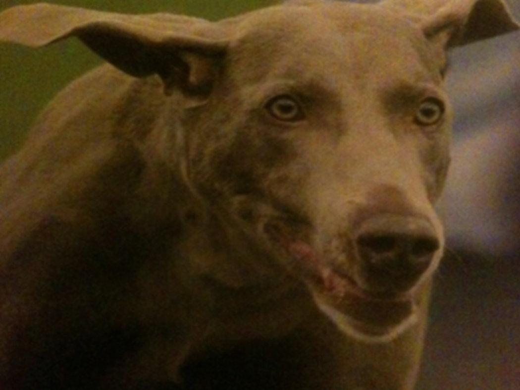 Dog Trainig Success @ Waggles, LLC