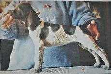 Ripley - Puppy.jpg