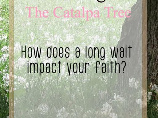 Waiting: The Catalpa Tree