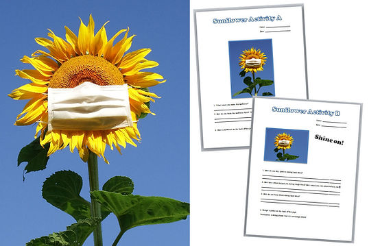 Image for Sunflower Activies Link.jpg