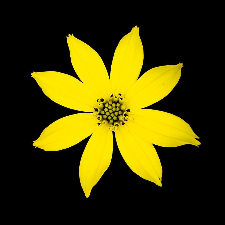 Vernissage: GANs'N'Roses - Nicolas Mériel