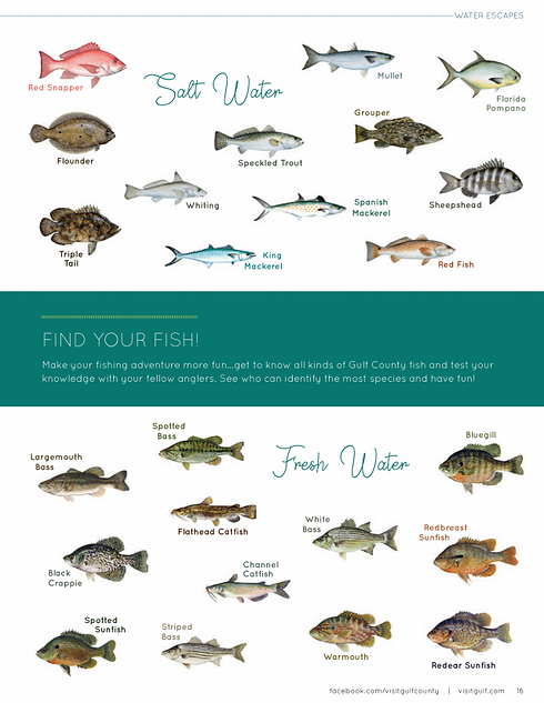 GULF FISH GUIDE.PNG