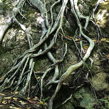 Roots and rock #naturesalchemy.jpg