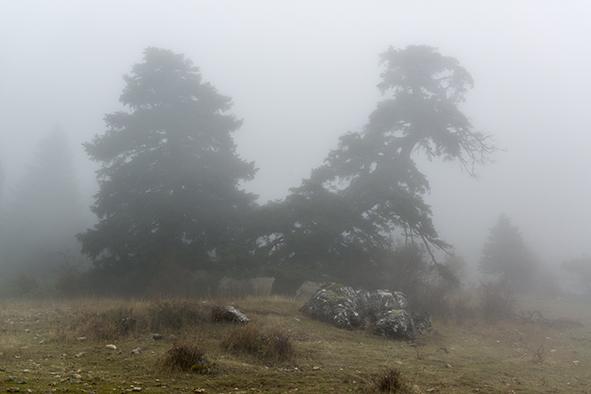 Sierra Nieves  005