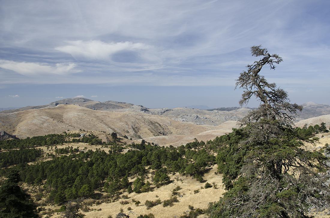 Sierra Nieves  020