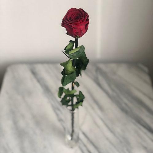 Stabilisierte Rose (rot) mit Stiel
