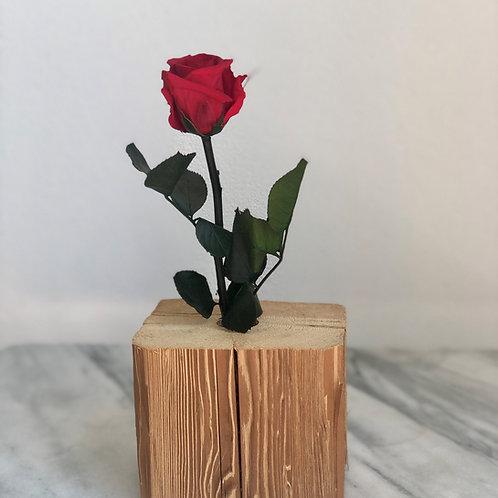 Stabilisierte rote Rose mit Stiel