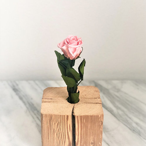 Stabilisierte pastellrosa Rose mit Stiel