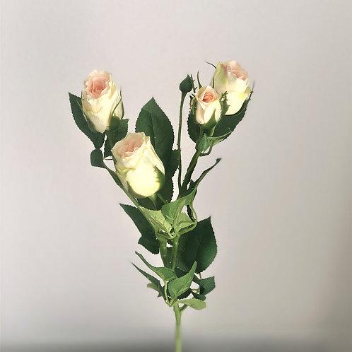 Künstlicher Rosenzweig (Vanille Farbe) ca. 69 cm