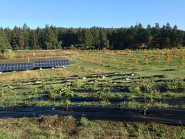 Golden Tree Farm
