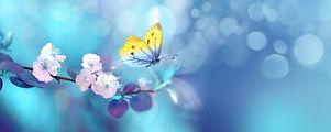 Beautiful blue yellow butterfly in fligh