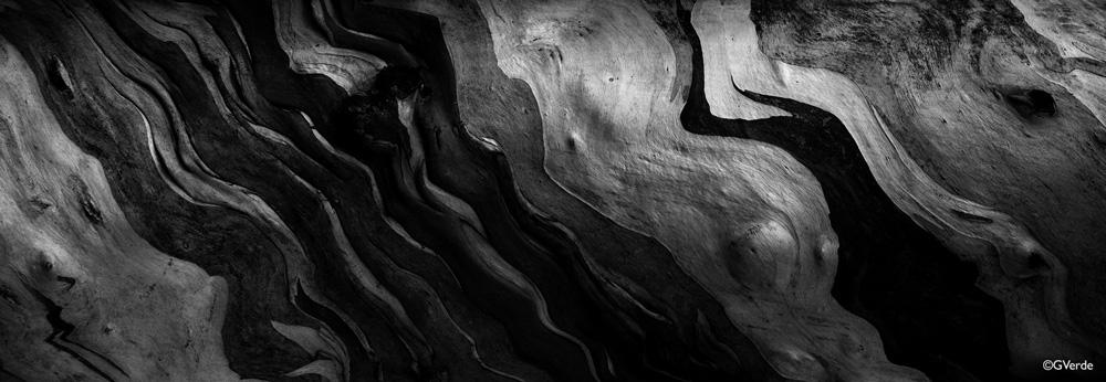 eurecaliptus.jpg