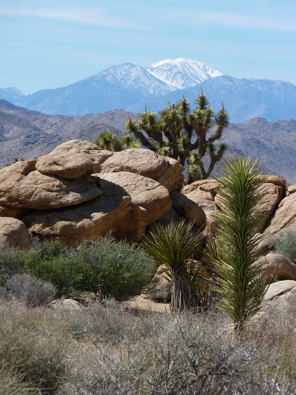 Looking across Joshua Tree National Park to Mt. San Jacinto.