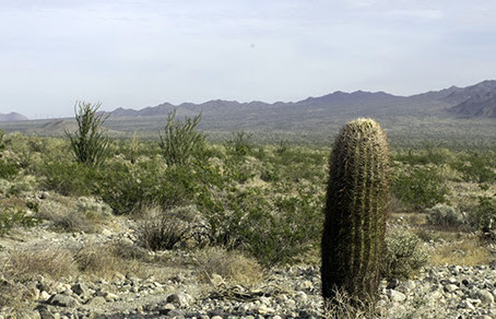 Paradise Valley Public Comment Opportunity