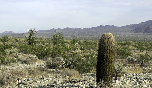 Image of Shavers Valley, home to the proposed Paradise Valley development.  Photo by Chris Clarke.