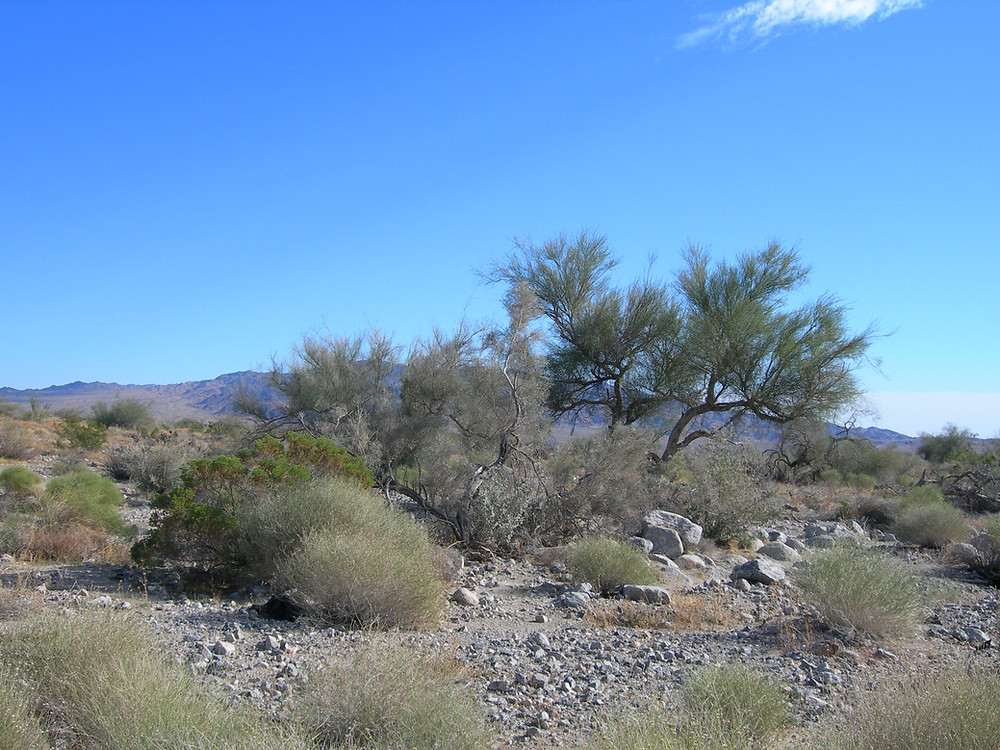 A photo of Shaver's Valley, the location south of Joshua Tree National Park where the Paradise Valley development is planned.
