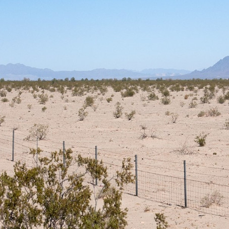 Palen project back on track to threaten Joshua Tree National Park