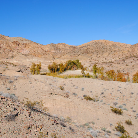 Study shows Cadiz water project would threaten spring in national monument