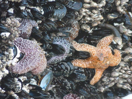 Yachats - the perfect Oregon coast escape