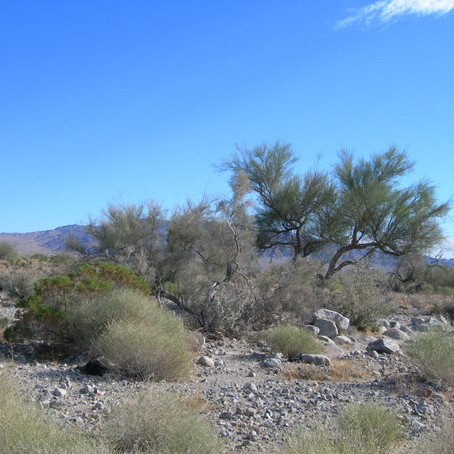 Planning Commission to hear proposal for new city on southern border of Joshua Tree National Park