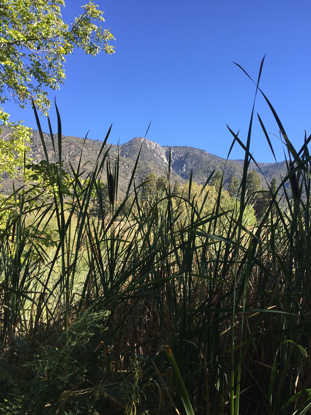 A view of the San Bernardino Mountains from Oak Glen
