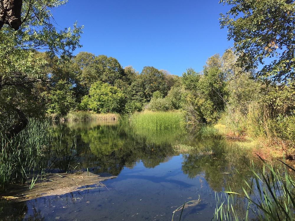 A pond in the Oak Glen Preserve