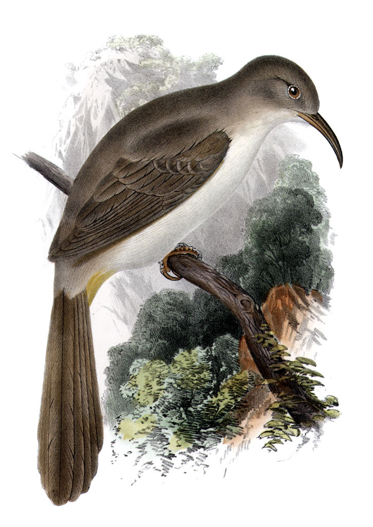Over 1,000 acres of prime habitat for LeConte's Thrasher will be destroyed by the Paradise Valley development.