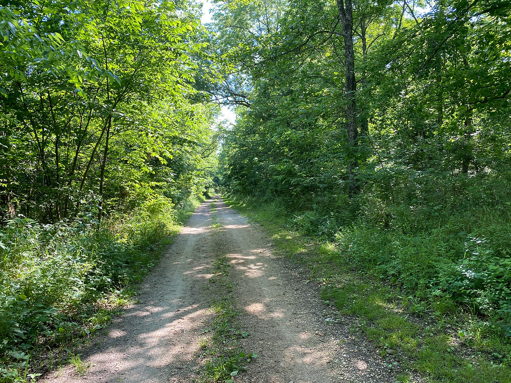 The Old Wire Road through Wilson's Creek National Battlefield, Missouri.  This stretch of the Wire Road also served as the Butterfield Overland Trail, while parts also served as the Trail of Tears.