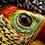 Thumbnail: Curl-Crested Aracari (Pteroglossus Beauharnaesii)