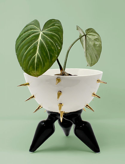 BDSM Fruit Bowl With Butt Plug Legs with 22kt Gold